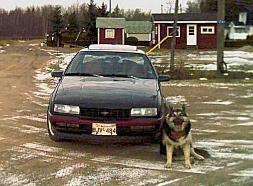 Me and My Dog, Sasha